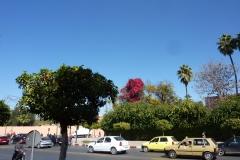 Marrakech 2013 0041